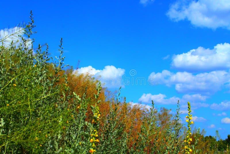 Flotador hermoso de las nubes sobre la hierba foto de archivo