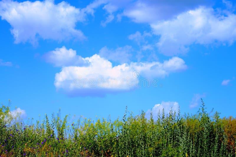 Flotador hermoso de las nubes sobre la hierba fotografía de archivo libre de regalías