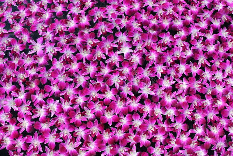 Flotador púrpura de las orquídeas en el agua fotos de archivo libres de regalías
