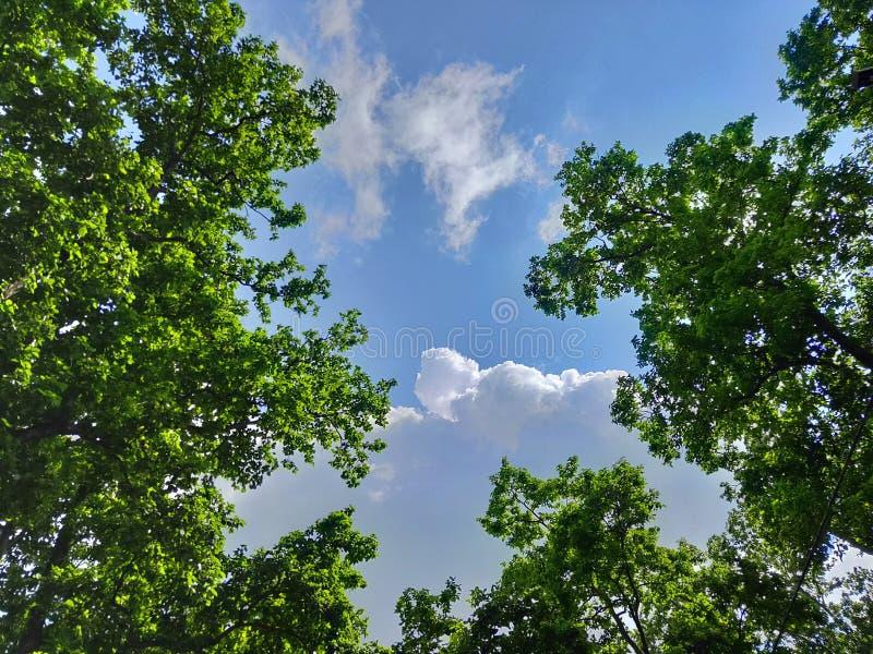 Flots hermosos de las nubes en las nuevas hojas verdes de los árboles birmanos de la sal imagen de archivo