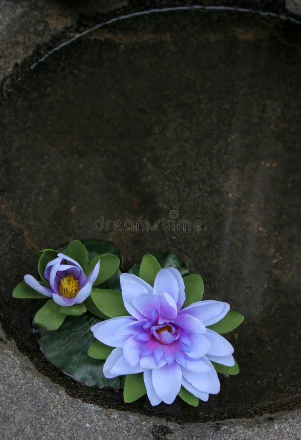 flottörhus blommor royaltyfri bild