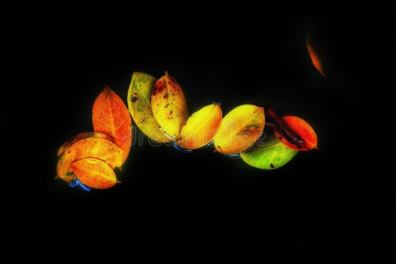 flottörhus leafs fotografering för bildbyråer