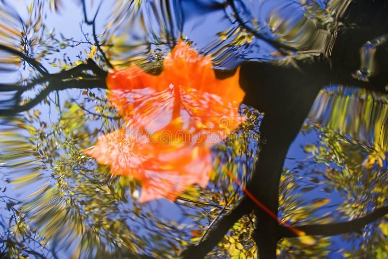 flottörhus leafvatten för höst royaltyfria foton