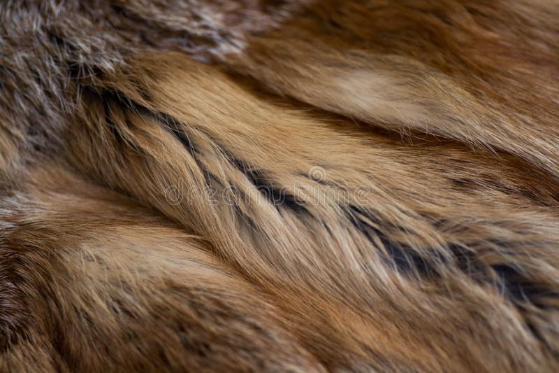 Flott och lyxig päls för röd räv arkivbild