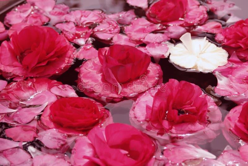 Flottement rose de fleurs photo stock