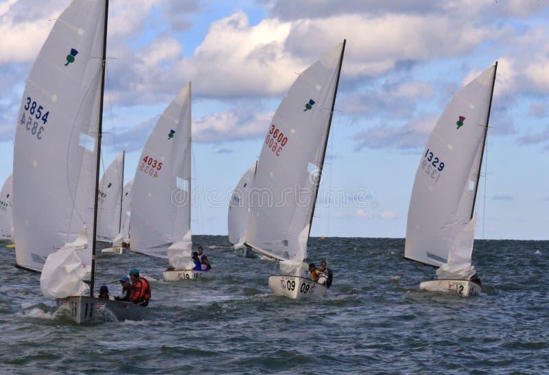 Flottilj av tävlings- fartyg royaltyfri bild