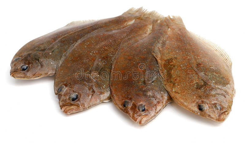 Flounder fishes royalty free stock photography