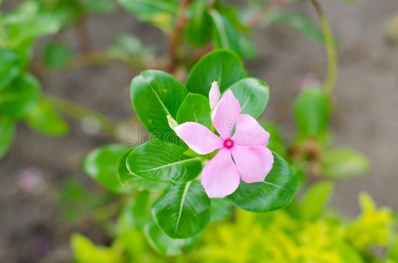 Flourish de muitas flores fotografia de stock royalty free