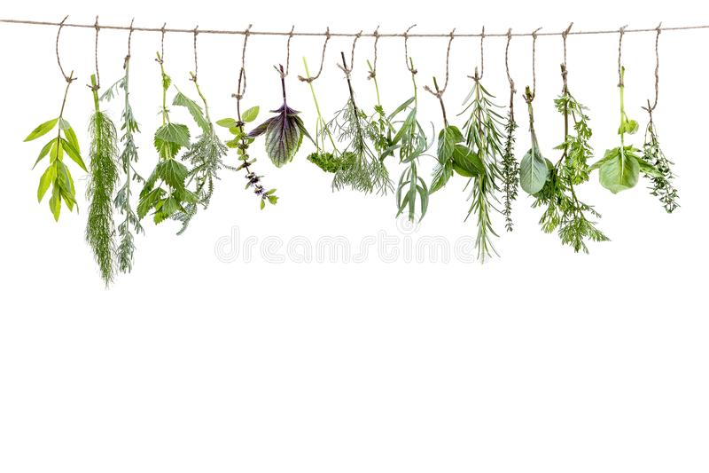Flovouring frais et plantes médicinales et herbes accrochant sur une ficelle, devant un backgroung blanc image stock