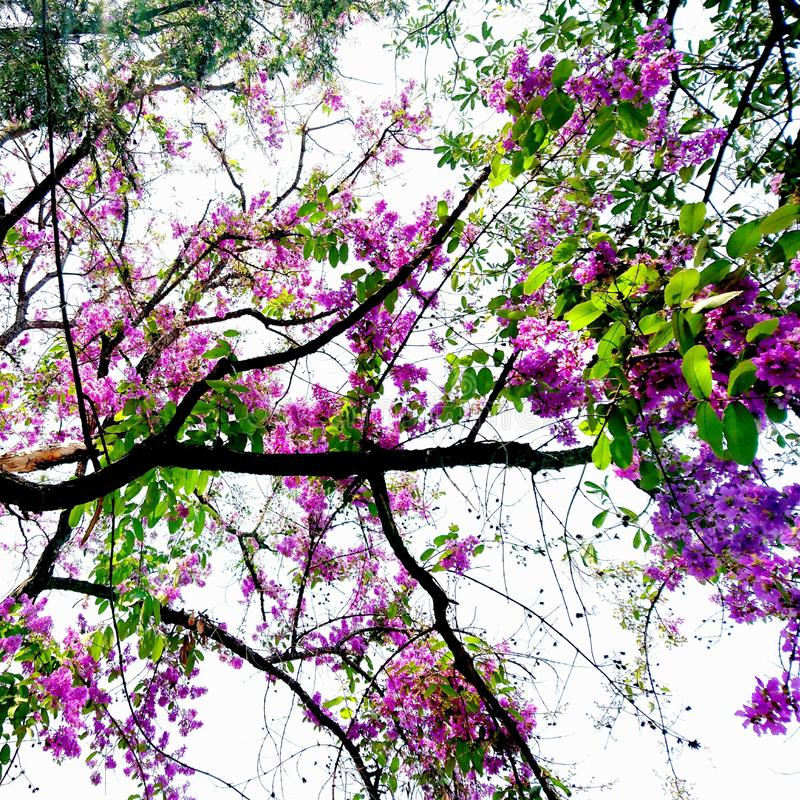 Flower 🌸 and sky royalty free stock image