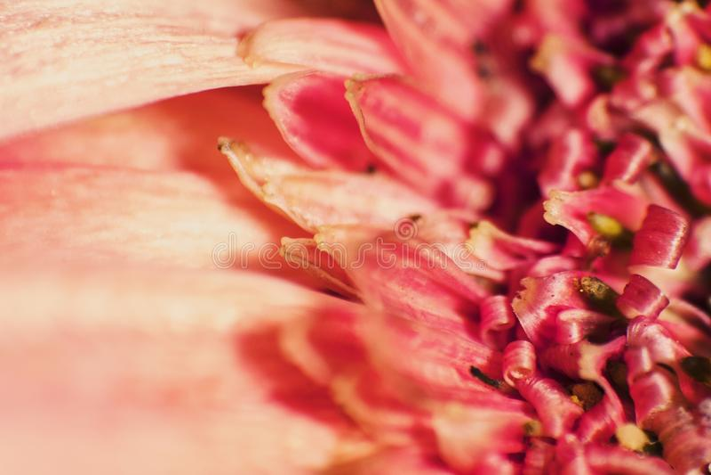Flower& x27; сердце s стоковые фотографии rf