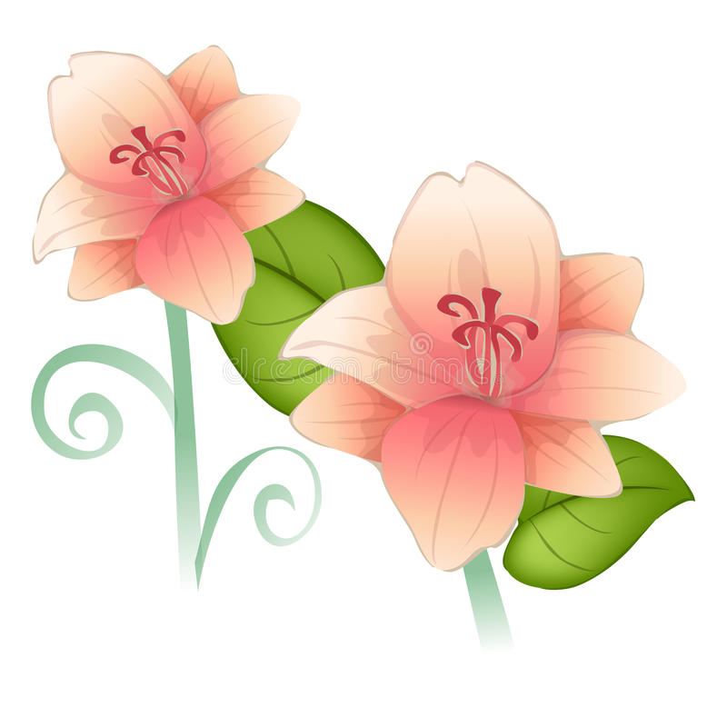 Flower. Pink flowers with green leaves on the white background vector illustration