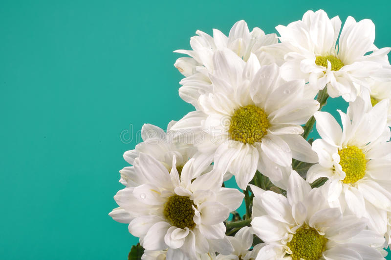 Download Flower stock photo. Image of greenish, growth, flower - 10628372