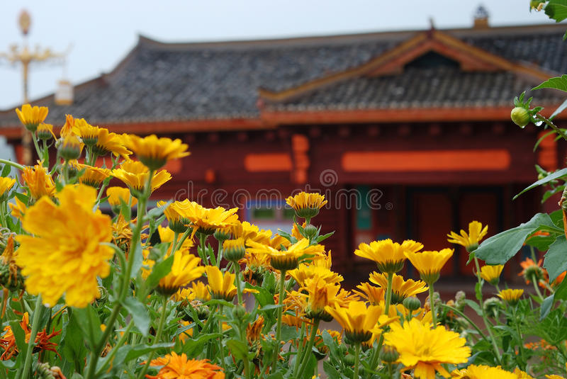 Flower. Front Chinese tradition construction fresh flower royalty free stock image