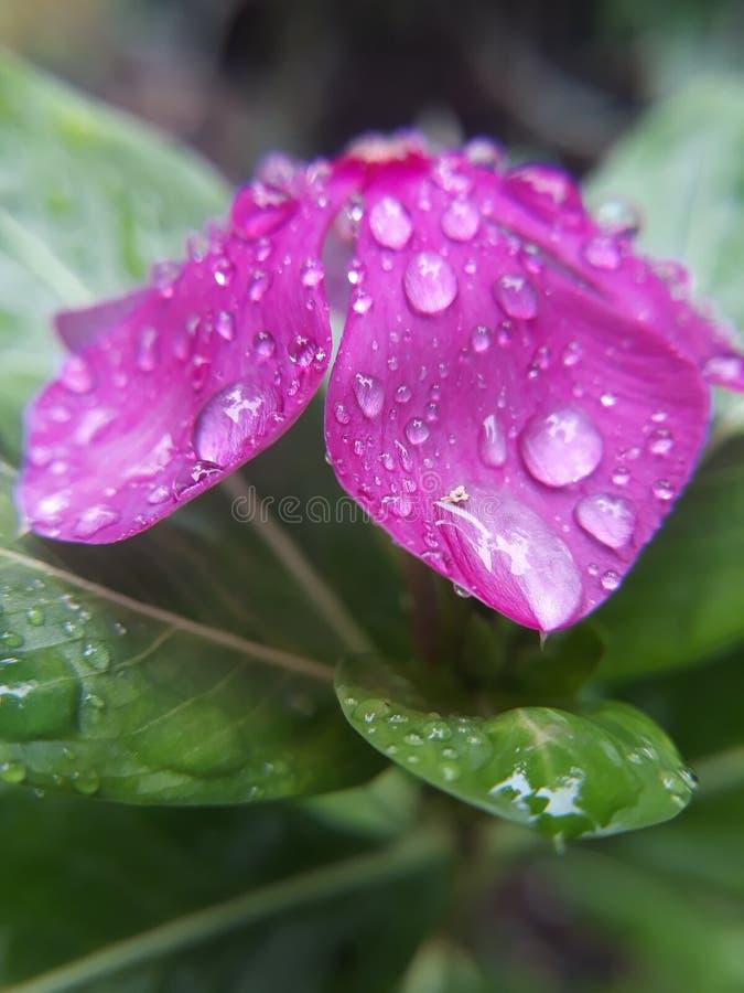 Flower1 lizenzfreies stockfoto