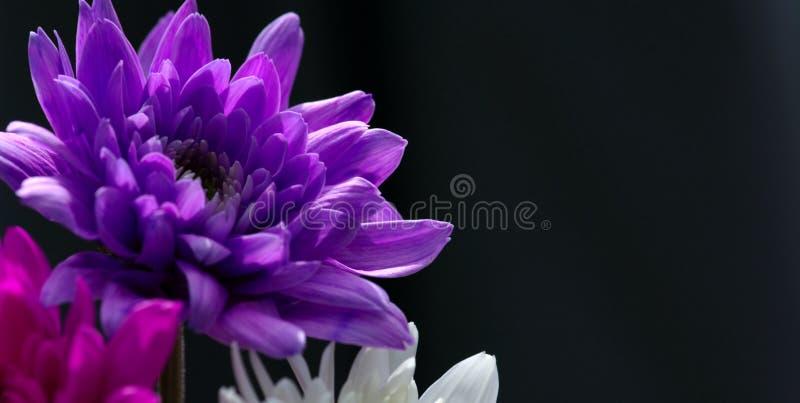 Download Flower stock image. Image of macro, flower, chrysantheums - 123183