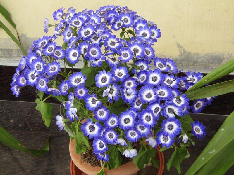 Flower1 imagem de stock