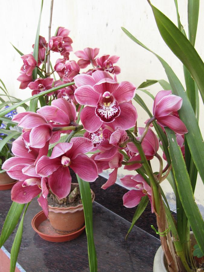 Flower2 foto de stock royalty free