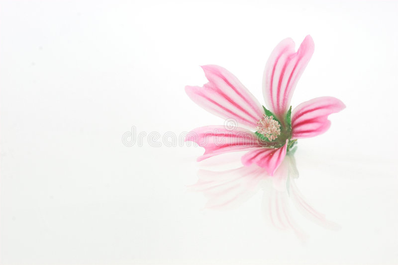 Download Flower Stock Images - Image: 1413984