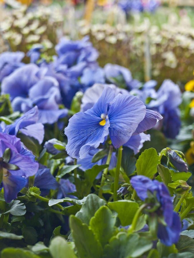 Download Flower stock image. Image of close, macro, offer, market - 14572979