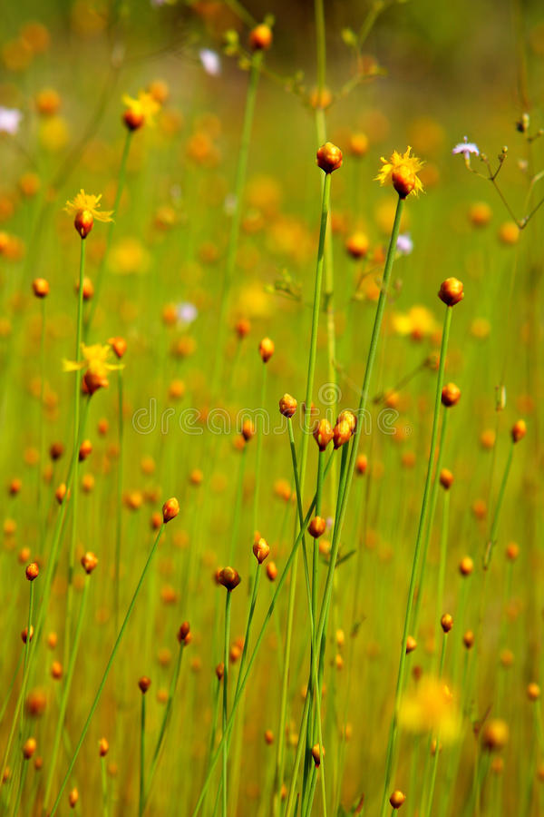 Download Flower stock image. Image of radiant, outdoor, design - 14861265