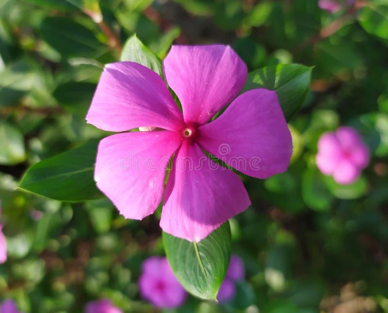 Flower royaltyfria bilder