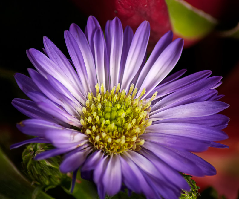 Download Flower stock image. Image of wild, life, flowers, flower - 167441