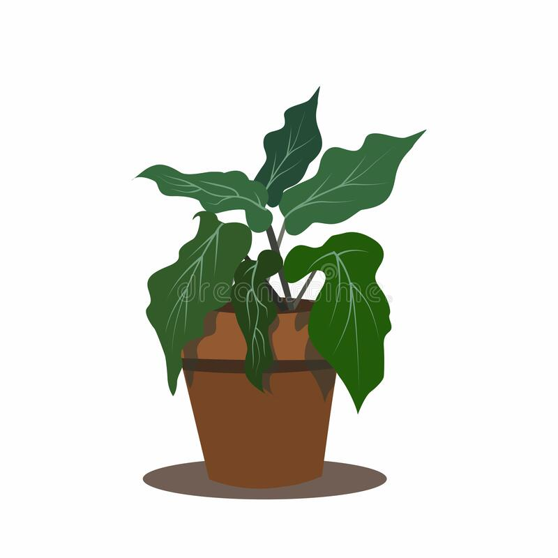 Flower pot with tropical leaves royalty free stock photography