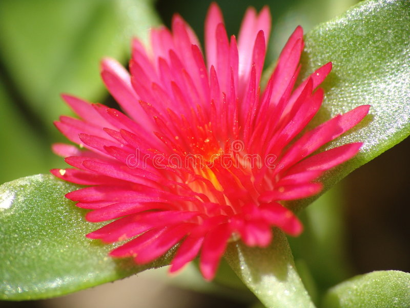 Download Flower Stock Photography - Image: 184422