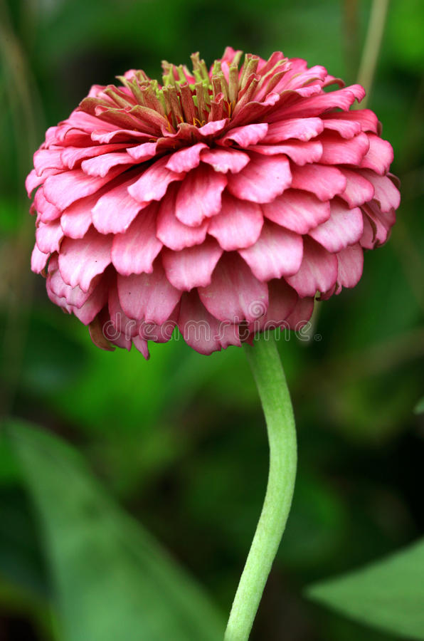 Flower. Beautiful detailed shot of blooming flower royalty free stock photos