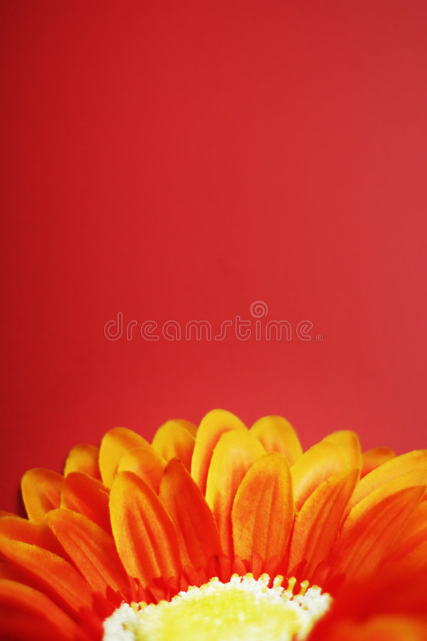 Flower 2. Orange, yellow, and red flower in front of red/pinkish background stock photography