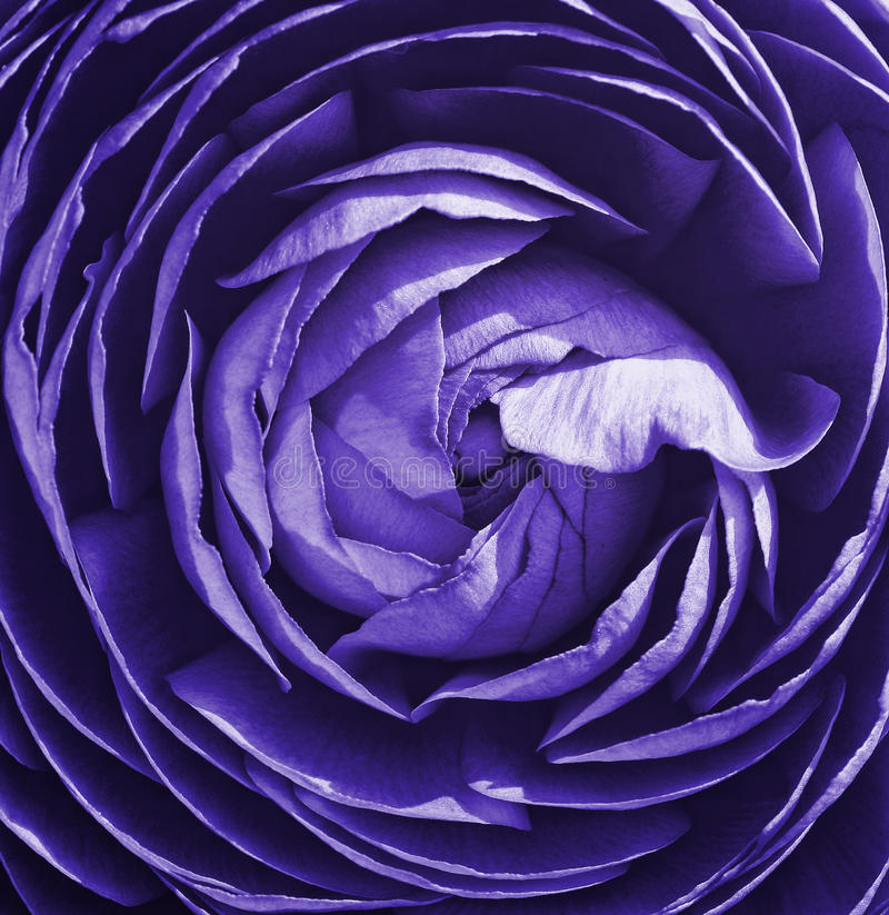 Download Flower Stock Photography - Image: 21435312
