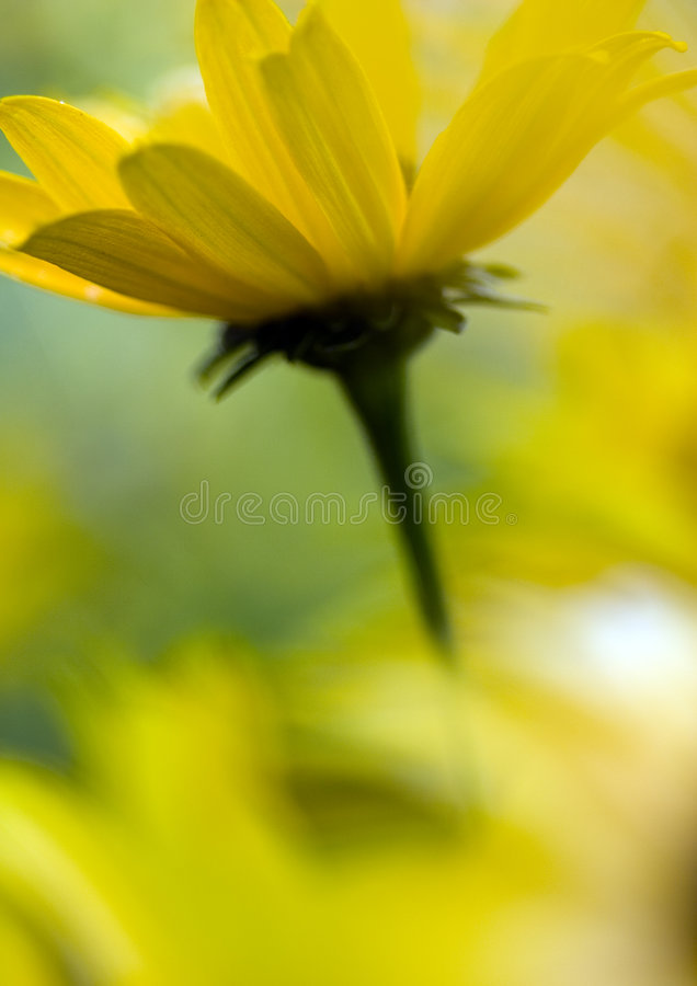 Flower royalty free stock photography
