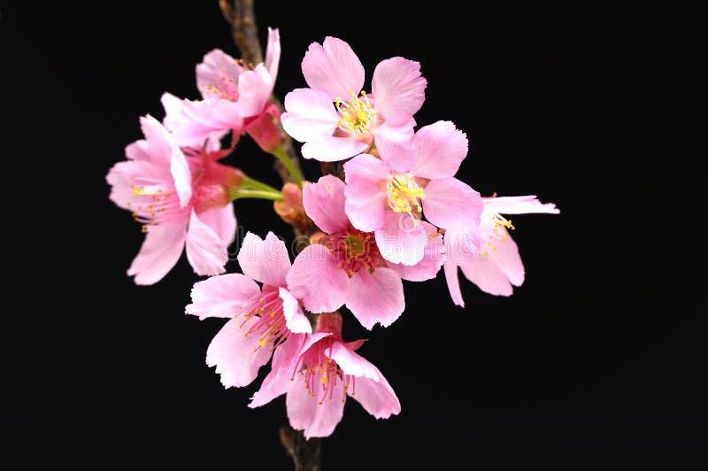 Download Flower stock illustration. Image of beauty, natural, illustration - 22609944
