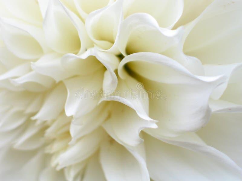Flower. White flower stock photos