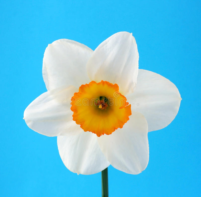 Download Flower stock image. Image of white, year, wild, plant - 26077763
