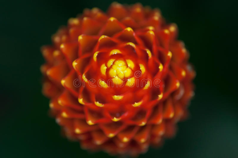 Flower. Top view of flower with symmetric shape royalty free stock photo