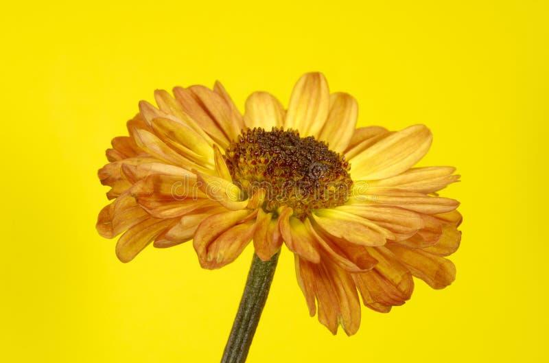 Download Flower stock photo. Image of details, blossom, summer - 2787950