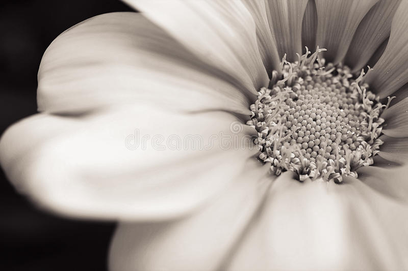 Flower. Macro shot of flower in black and white royalty free stock images