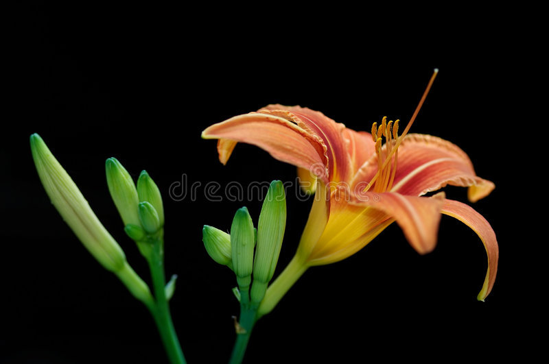 Download Flower stock photo. Image of abstraction, nature, carpel - 2950418