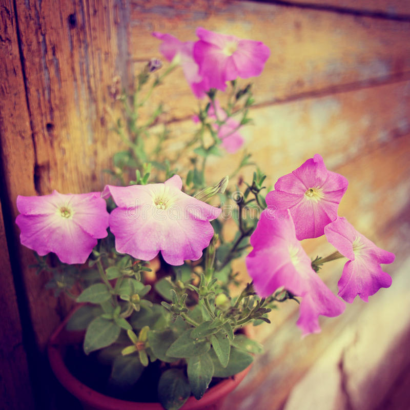 Flower-7 images stock