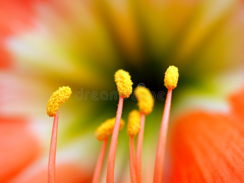 Download Flower  39 stock image. Image of nature, macro, blossom - 2201201