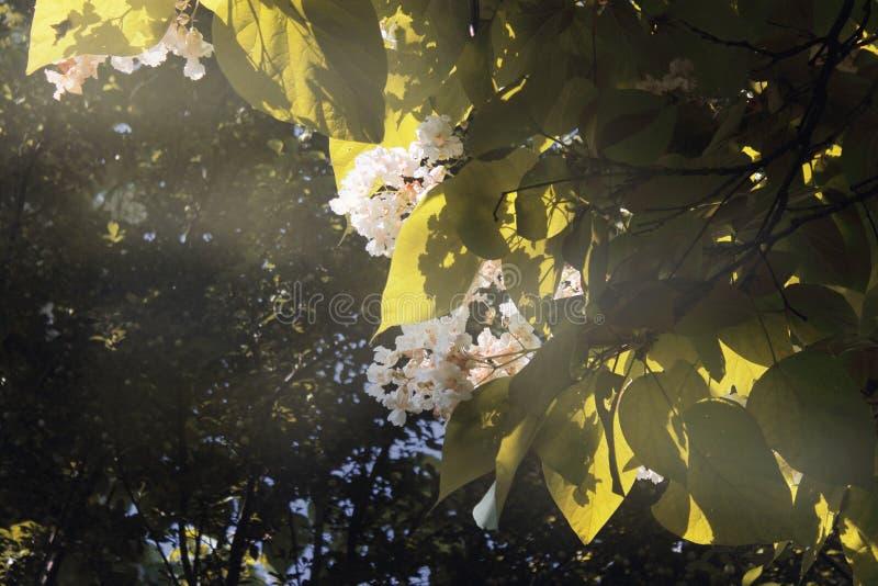 Flower3 стоковые фотографии rf