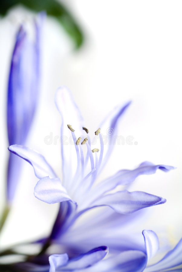 Download Flower. Royalty Free Stock Images - Image: 4284889