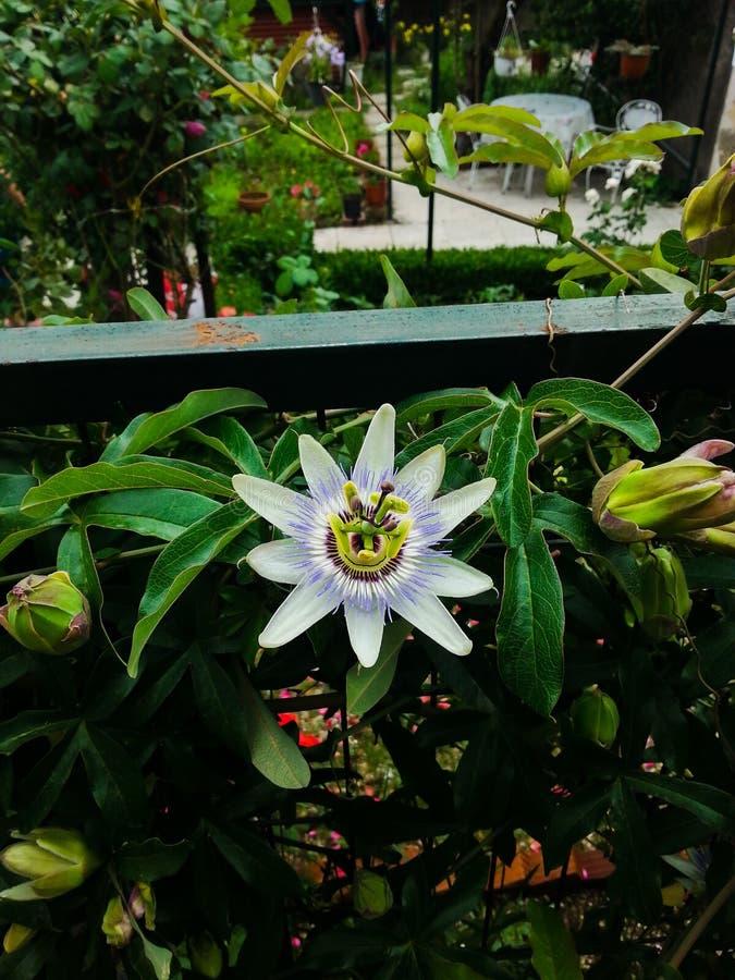 Flower1 stockbilder