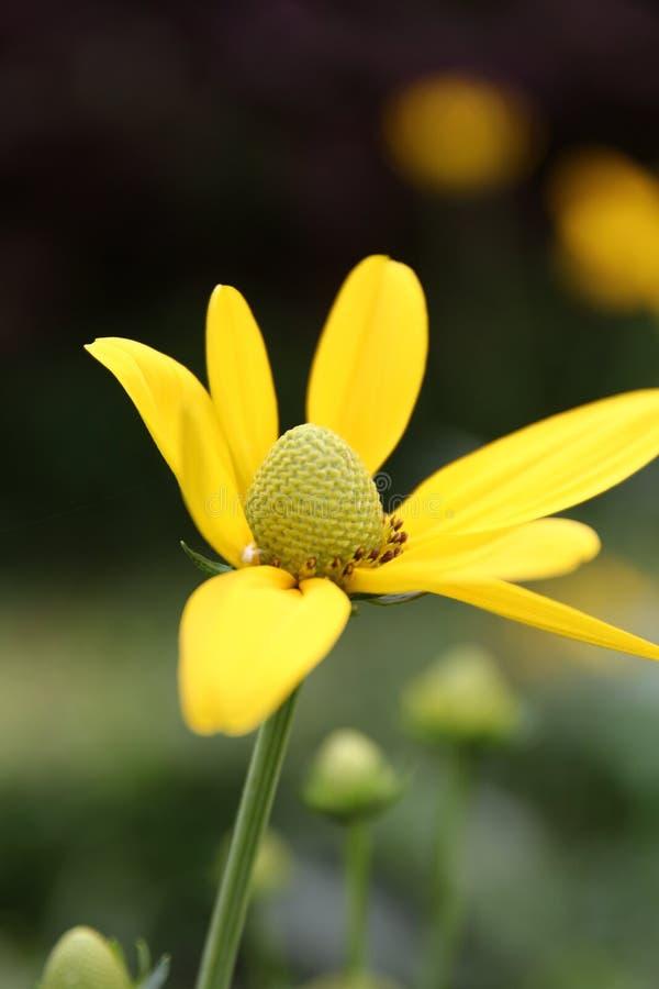 #flower lizenzfreies stockfoto