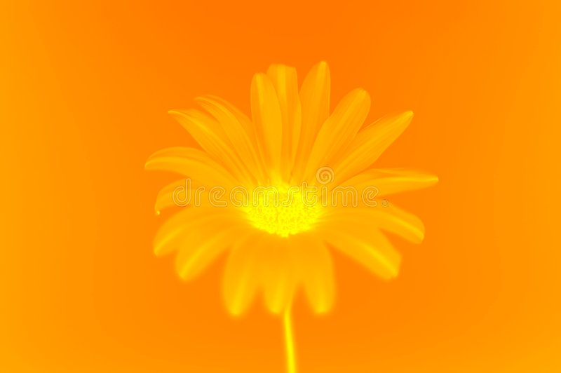 Download Flower stock photo. Image of orange, shot, illustrations - 457554