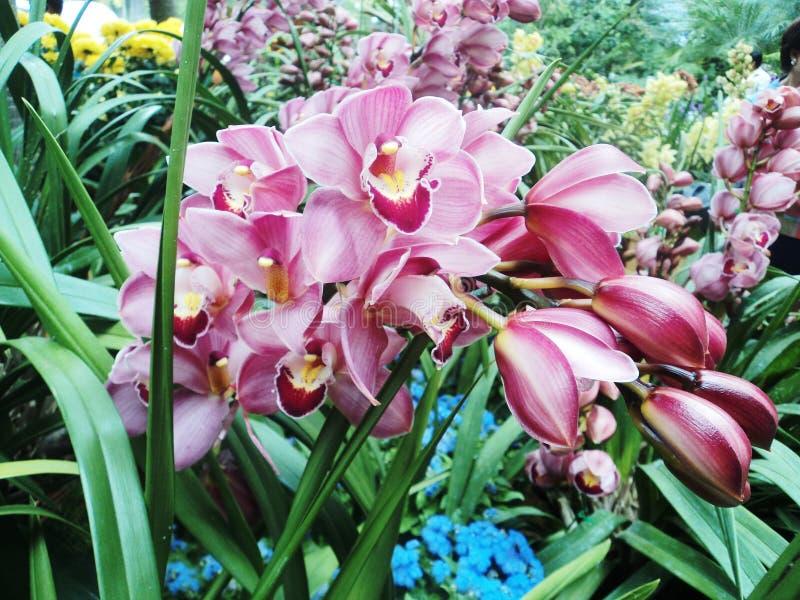 Flower2 fotografía de archivo libre de regalías