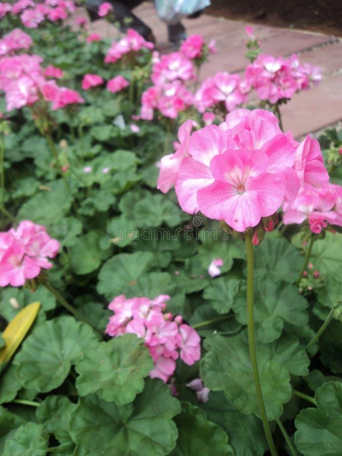 Flower3 fotografía de archivo