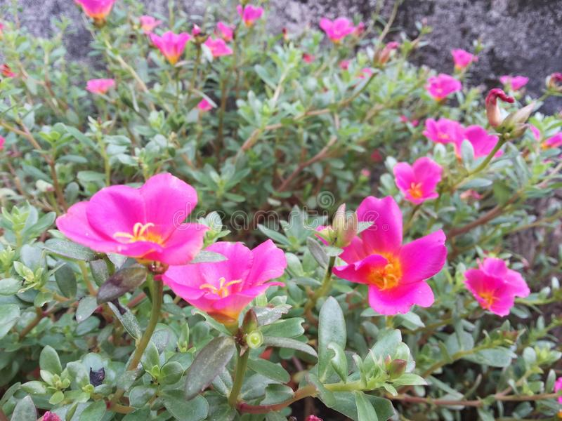 Flower2 photographie stock libre de droits